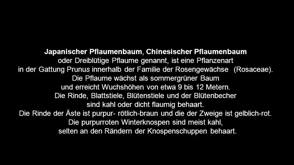 Gesamtgestaltung Wolfgang wkornparaguay@yahoo.com  Musik Yanni - Prelude