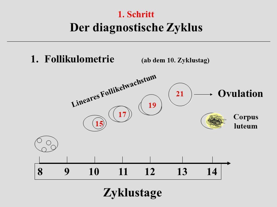 1. Schritt Der diagnostische Zyklus 1.Follikulometrie (ab dem 10. Zyklustag) 8 9 10 11 12 13 14 15 17 19 21 Zyklustage Ovulation Corpus luteum Lineare