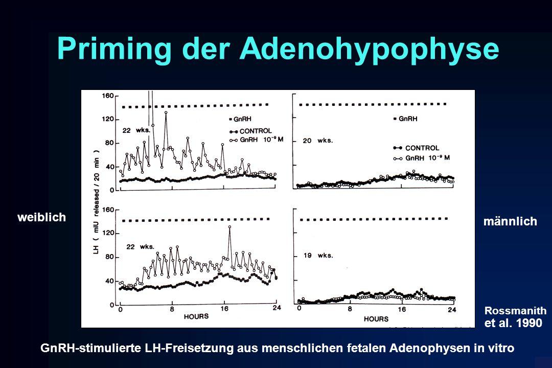 Priming der Adenohypophyse GnRH-stimulierte LH-Freisetzung aus menschlichen fetalen Adenophysen in vitro weiblich männlich Rossmanith et al. 1990