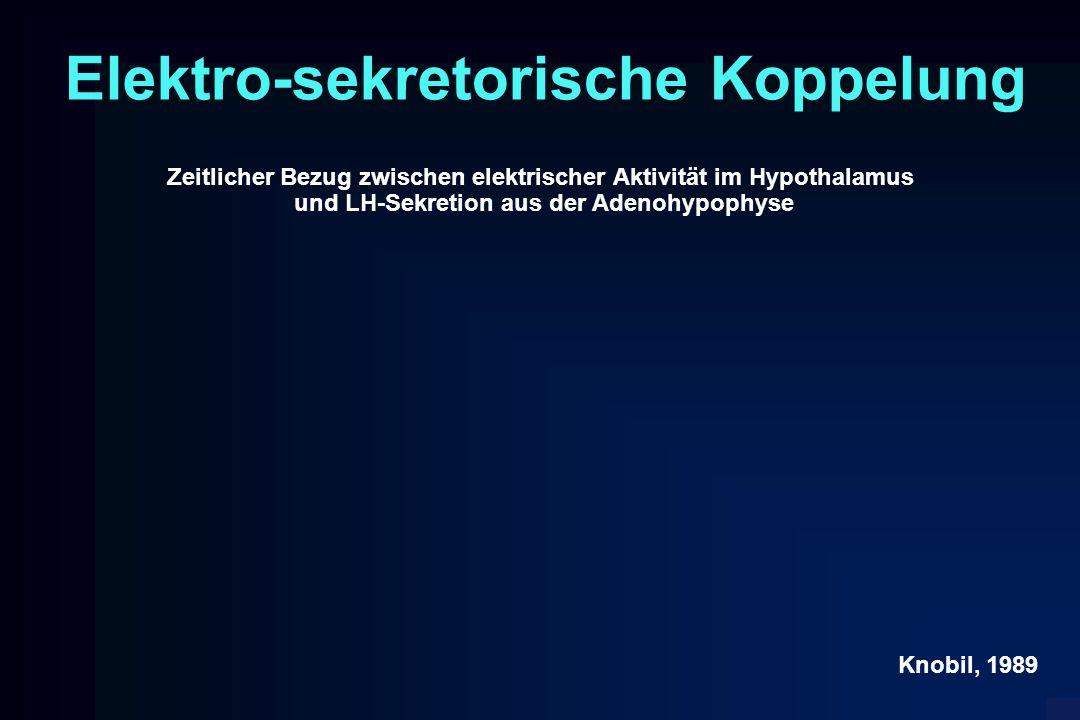 Elektro-sekretorische Koppelung Zeitlicher Bezug zwischen elektrischer Aktivität im Hypothalamus und LH-Sekretion aus der Adenohypophyse Knobil, 1989