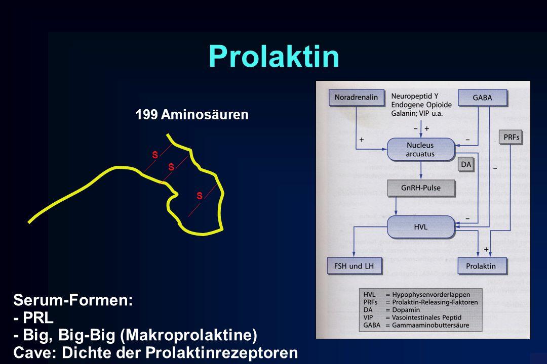 Prolaktin S S S 199 Aminosäuren Serum-Formen: - PRL - Big, Big-Big (Makroprolaktine) Cave: Dichte der Prolaktinrezeptoren