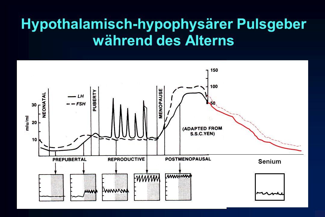 Hypothalamisch-hypophysärer Pulsgeber während des Alterns Senium