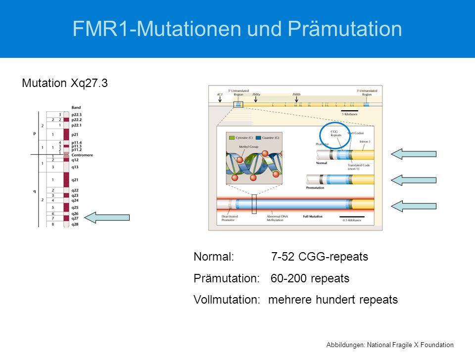 FMR1-Mutationen und Prämutation Mutation Xq27.3 Normal: 7-52 CGG-repeats Prämutation: 60-200 repeats Vollmutation: mehrere hundert repeats Abbildungen: National Fragile X Foundation