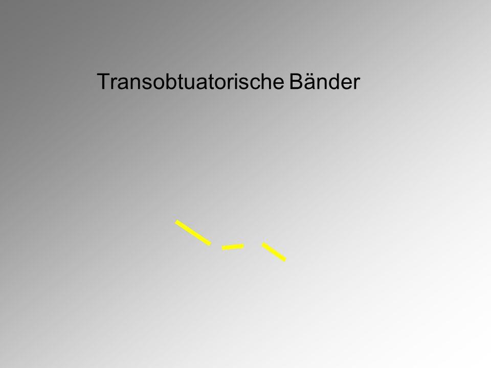 Transobtuatorische Bänder