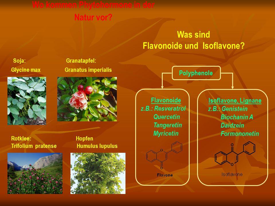 Wo kommen Phytohormone in der Natur vor? Soja: Granatapfel: Glycine max Granatus imperialis Rotklee: Hopfen Trifolium pratense Humulus lupulus Flavono