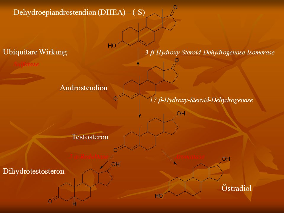 Dehydroepiandrostendion (DHEA) – (-S) Ubiquitäre Wirkung : 3  -Hydroxy-Steroid-Dehydrogenase-Isomerase Sulfatase Androstendion 17  -Hydroxy-Steroid-