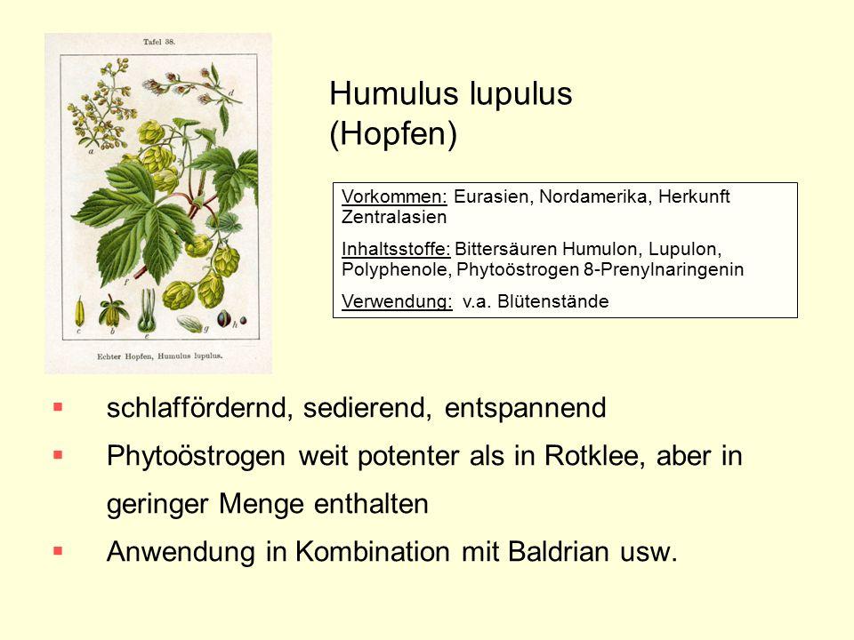 Humulus lupulus (Hopfen)  schlaffördernd, sedierend, entspannend  Phytoöstrogen weit potenter als in Rotklee, aber in geringer Menge enthalten  Anw