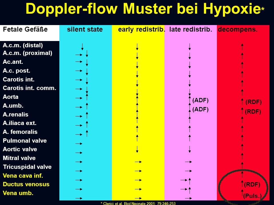Doppler-flow Muster bei Hypoxie * Fetale Gefäße silent state early redistrib. late redistrib. decompens. A.c.m. (distal) A.c.m. (proximal) Ac.ant. A.c