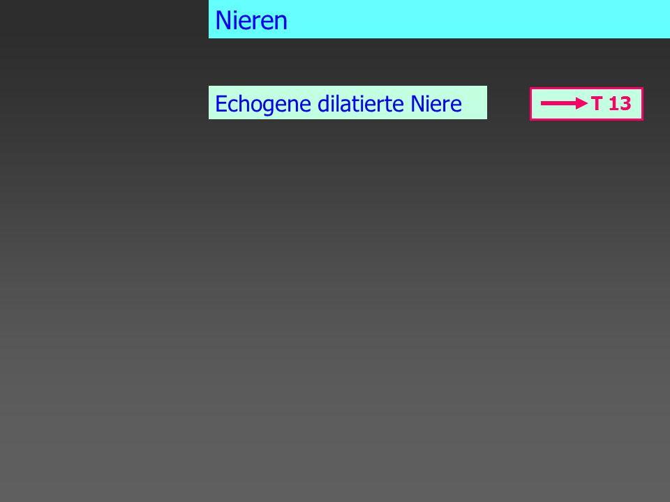 T 13 Echogene dilatierte Niere Nieren