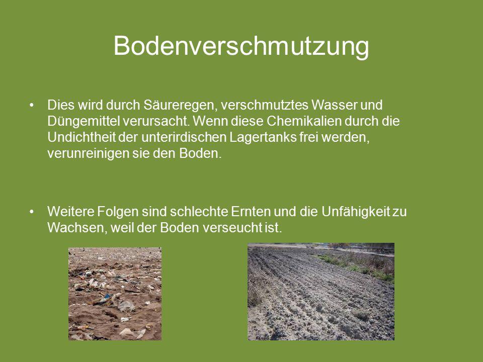 Bodenverschmutzung Dies wird durch Säureregen, verschmutztes Wasser und Düngemittel verursacht.