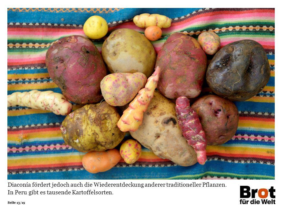 Seite 13/19 Diaconía fördert jedoch auch die Wiederentdeckung anderer traditioneller Pflanzen. In Peru gibt es tausende Kartoffelsorten.