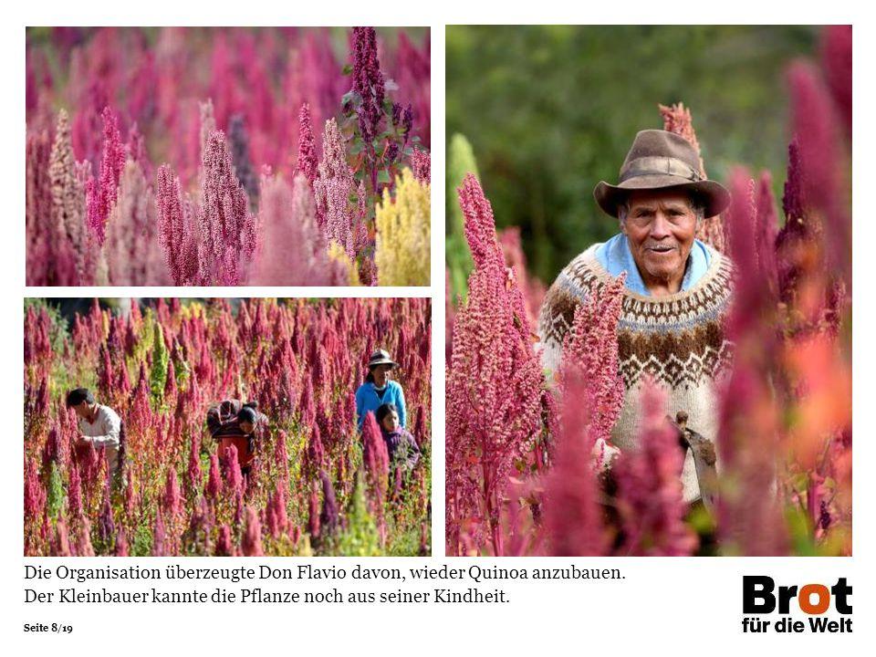 Seite 8/19 Die Organisation überzeugte Don Flavio davon, wieder Quinoa anzubauen. Der Kleinbauer kannte die Pflanze noch aus seiner Kindheit.
