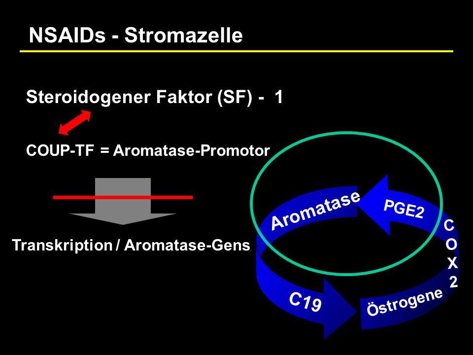 Aromatase C19 Östrogene COX2COX2 PGE2 COUP-TF = Aromatase-Promotor Transkription / Aromatase-Gens Steroidogener Faktor (SF) - 1 NSAIDs - Stromazelle