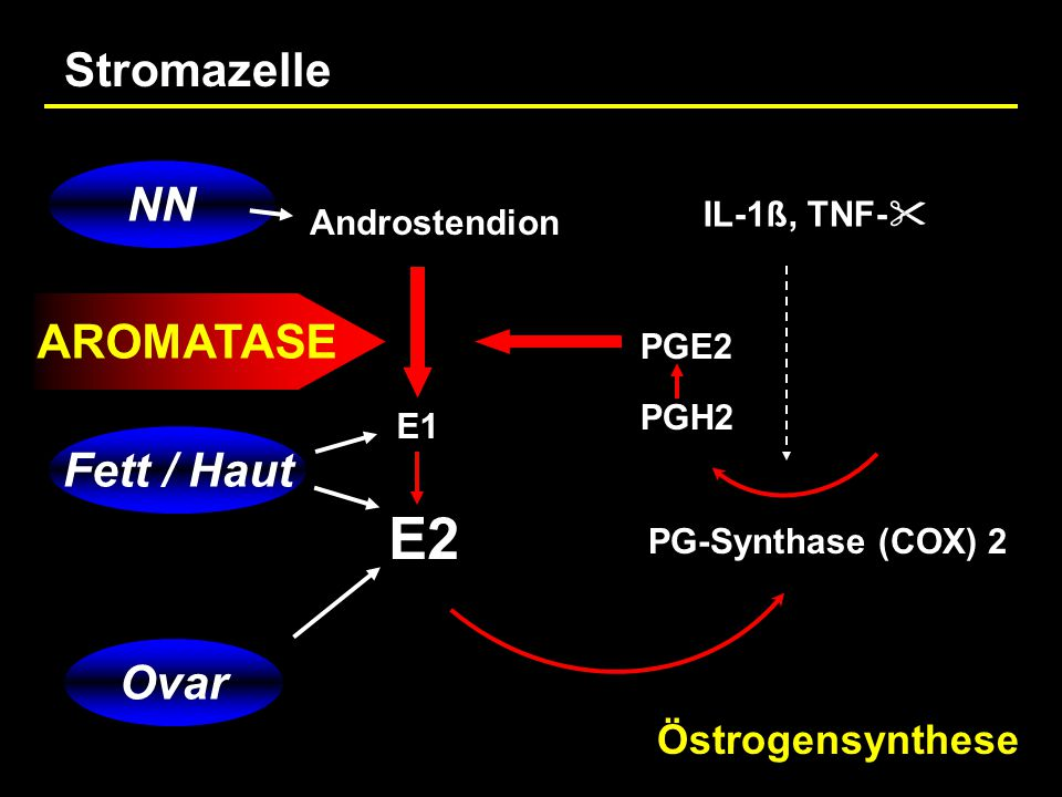 Androstendion E1 E2 PG-Synthase (COX) 2 PGH2 PGE2 IL-1ß, TNF-  NN Ovar Fett / Haut AROMATASE Östrogensynthese Stromazelle