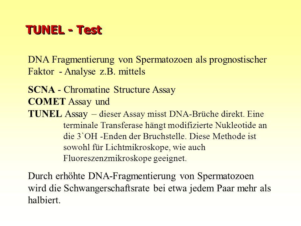 10.08.2015FIS Repromed - Gran Canaria 0812 TUNEL - Test DNA Fragmentierung von Spermatozoen als prognostischer Faktor - Analyse z.B. mittels SCNA - Ch