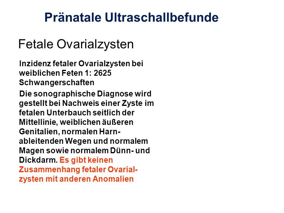 Fetale Ovarialzysten Inzidenz fetaler Ovarialzysten bei weiblichen Feten 1: 2625 Schwangerschaften Die sonographische Diagnose wird gestellt bei Nachw