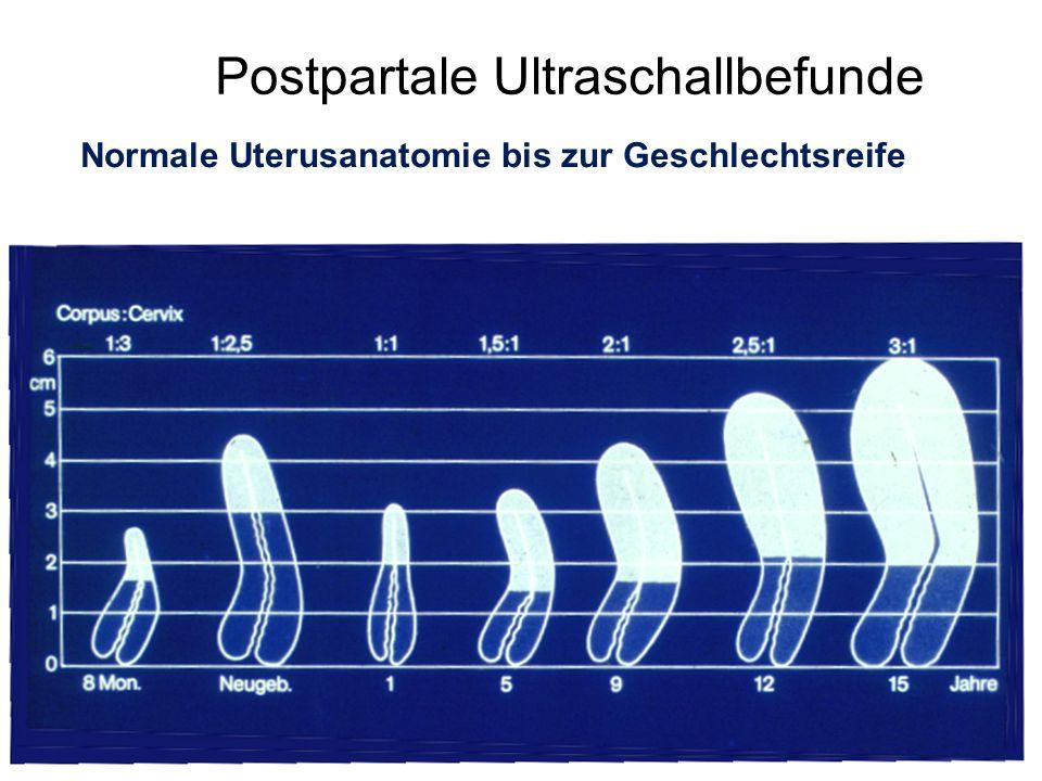 Postpartale Ultraschallbefunde Normale Uterusanatomie bis zur Geschlechtsreife