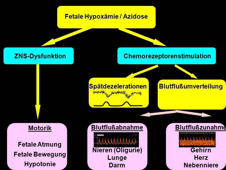 ZNS-DysfunktionChemorezeptorenstimulation Blutflußzunahme Gehirn Herz Nebenniere SpätdezelerationenBlutflußumverteilung Blutflußabnahme Nieren (Oligurie) Lunge Darm Motorik Fetale Atmung Fetale Bewegung Hypotonie Fetale Hypoxämie / Azidose