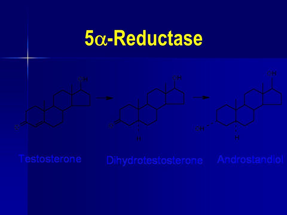 5  -Reductase
