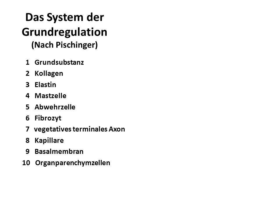 Das System der Grundregulation (Nach Pischinger) 1 Grundsubstanz 2 Kollagen 3 Elastin 4 Mastzelle 5 Abwehrzelle 6 Fibrozyt 7vegetatives terminales Axo