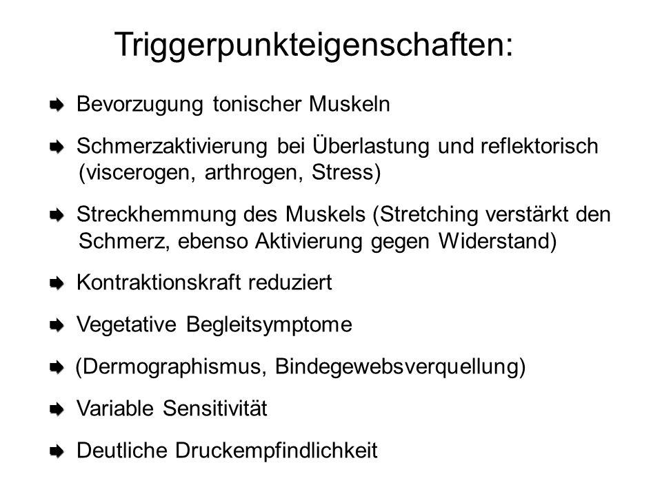 Triggerpunkteigenschaften:   Bevorzugung tonischer Muskeln   Schmerzaktivierung bei Überlastung und reflektorisch (viscerogen, arthrogen, Stress)