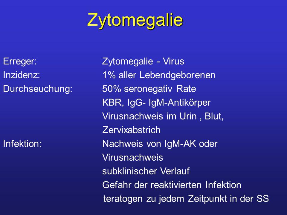 Erreger: Zytomegalie - Virus Inzidenz: 1% aller Lebendgeborenen Durchseuchung: 50% seronegativ Rate KBR, IgG- IgM-Antikörper Virusnachweis im Urin, Blut, Zervixabstrich Infektion: Nachweis von IgM-AK oder Virusnachweis subklinischer Verlauf Gefahr der reaktivierten Infektion teratogen zu jedem Zeitpunkt in der SS ytomegalie Zytomegalie