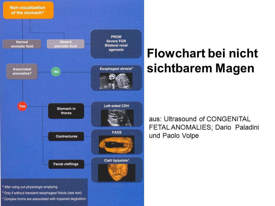 Flowchart bei nicht sichtbarem Magen aus: Ultrasound of CONGENITAL FETAL ANOMALIES; Dario Paladini und Paolo Volpe