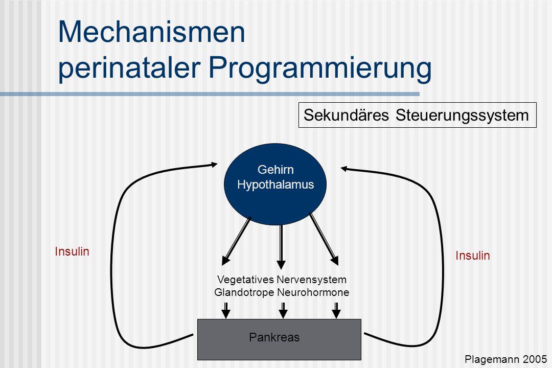 Mechanismen perinataler Programmierung Pankreas Gehirn Hypothalamus Vegetatives Nervensystem Glandotrope Neurohormone Plagemann 2005 Sekundäres Steuerungssystem Insulin