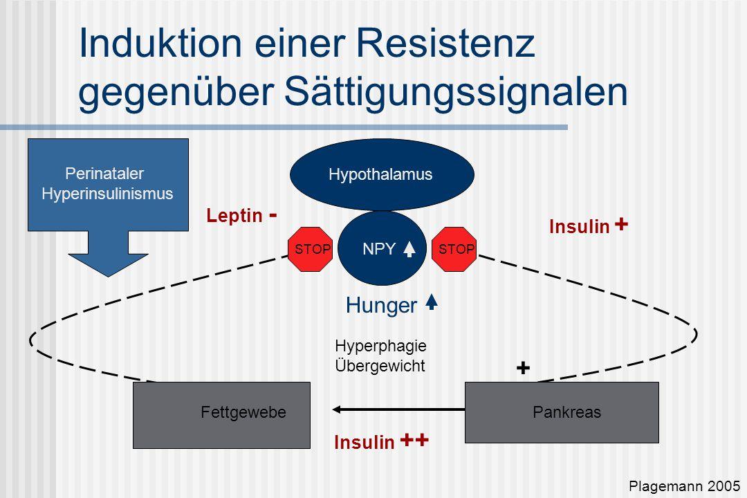 Induktion einer Resistenz gegenüber Sättigungssignalen Plagemann 2005 Hypothalamus NPY Hunger Leptin - + PankreasFettgewebe Insulin + Insulin ++ STOP Hyperphagie Übergewicht Perinataler Hyperinsulinismus
