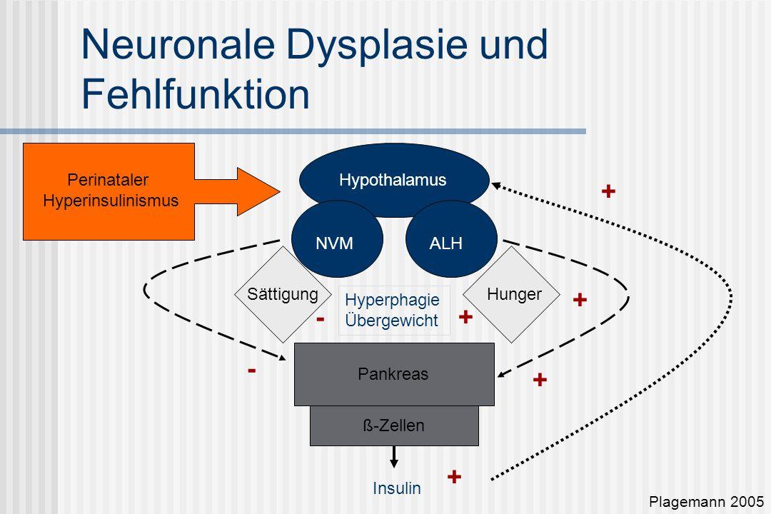Neuronale Dysplasie und Fehlfunktion Plagemann 2005 Pankreas ß-Zellen Hypothalamus NVMALH HungerSättigung - + Insulin Perinataler Hyperinsulinismus Hyperphagie Übergewicht + +- + +