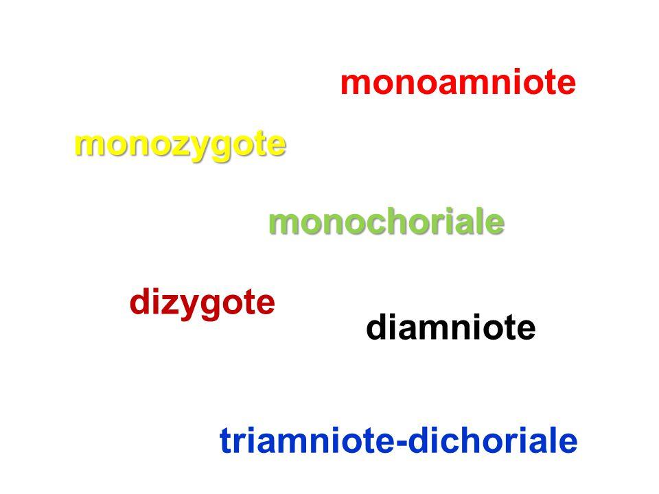 monozygote dizygote monochoriale monoamniote triamniote-dichoriale diamniote