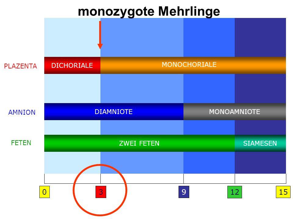 DICHORIALE DIAMNIOTE ZWEI FETEN MONOAMNIOTE SIAMESEN MONOCHORIALE 03915 PLAZENTA AMNION FETEN 12 monozygote Mehrlinge