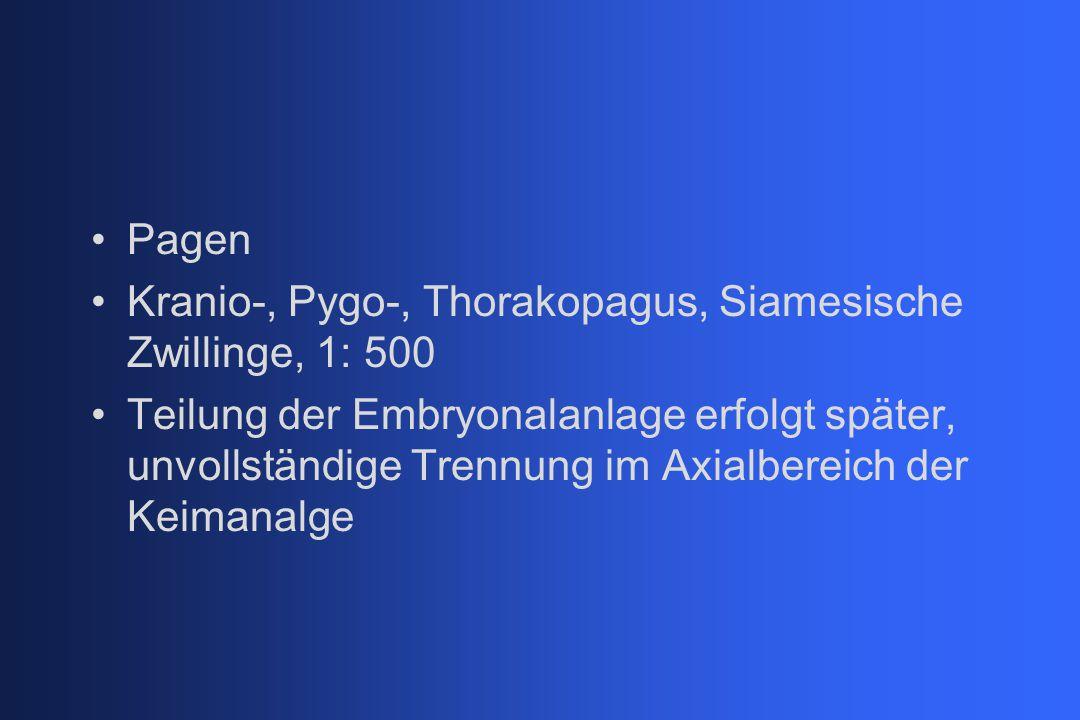 Pagen Kranio-, Pygo-, Thorakopagus, Siamesische Zwillinge, 1: 500 Teilung der Embryonalanlage erfolgt später, unvollständige Trennung im Axialbereich