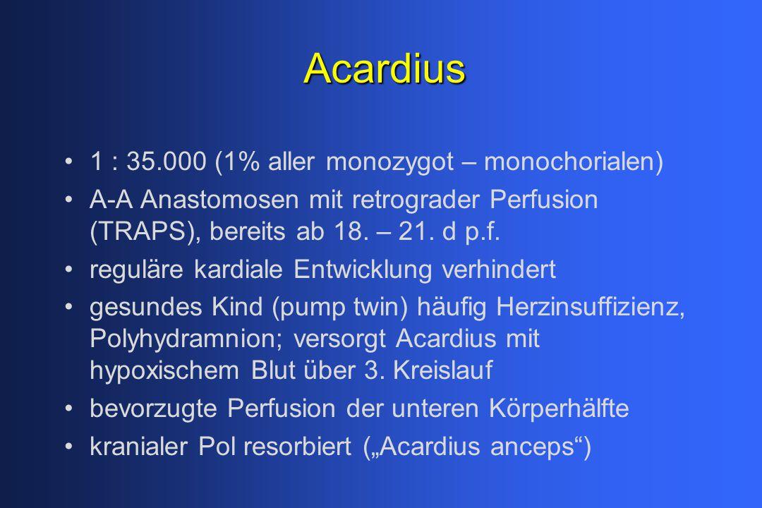 Acardius 1 : 35.000 (1% aller monozygot – monochorialen) A-A Anastomosen mit retrograder Perfusion (TRAPS), bereits ab 18. – 21. d p.f. reguläre kardi