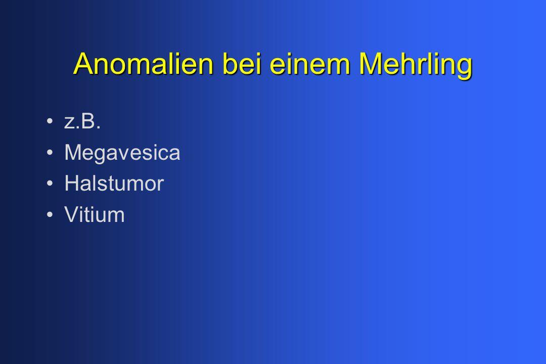 Anomalien bei einem Mehrling z.B. Megavesica Halstumor Vitium