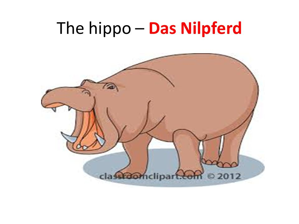 The hippo – Das Nilpferd