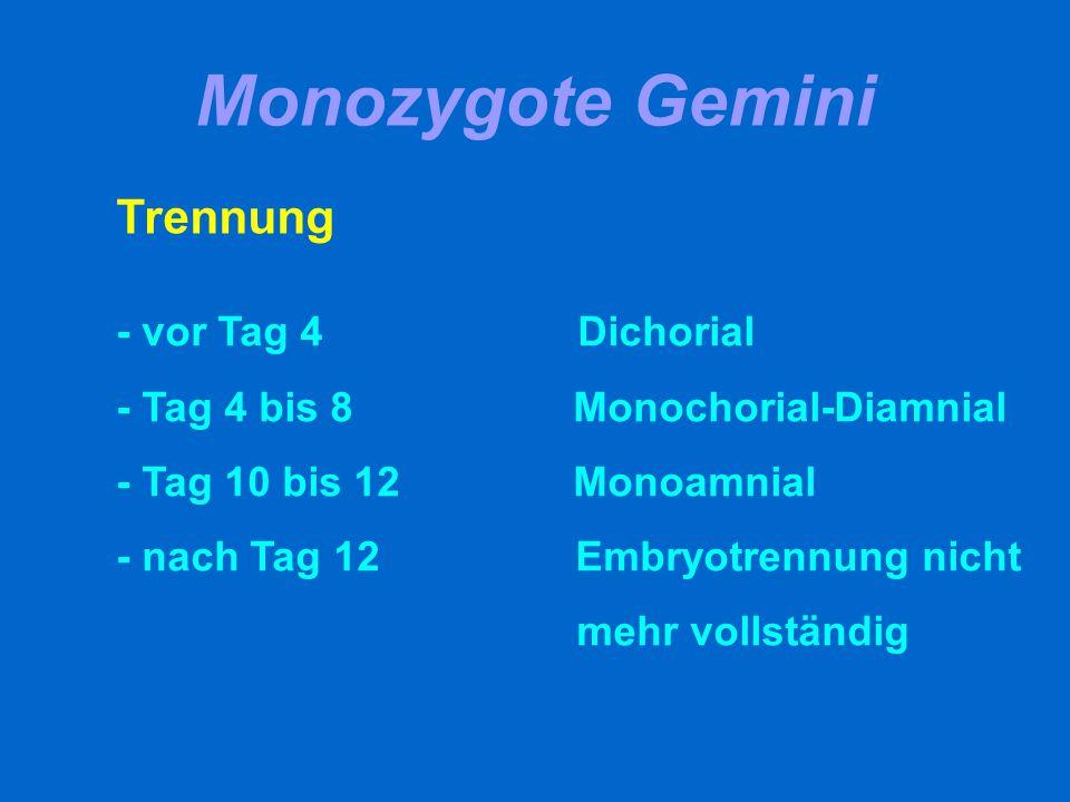Monozygote Gemini Trennung - vor Tag 4 Dichorial - Tag 4 bis 8 Monochorial-Diamnial - Tag 10 bis 12 Monoamnial - nach Tag 12 Embryotrennung nicht mehr