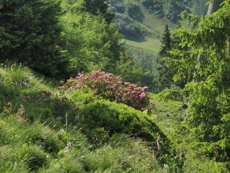 Nach einer kurzen Rast bei der Alpentaverne…