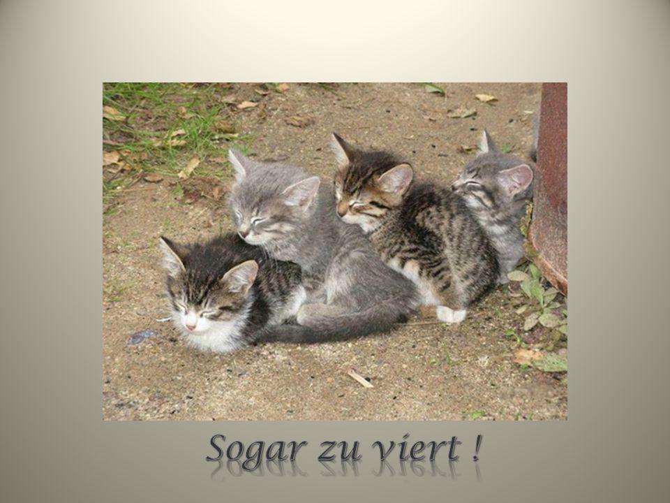webmaster@funpps4u.de