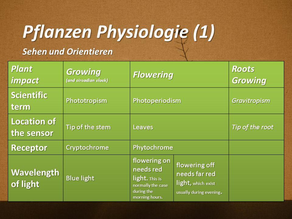 Pflanzen Physiologie (1) Sehen und Orientieren