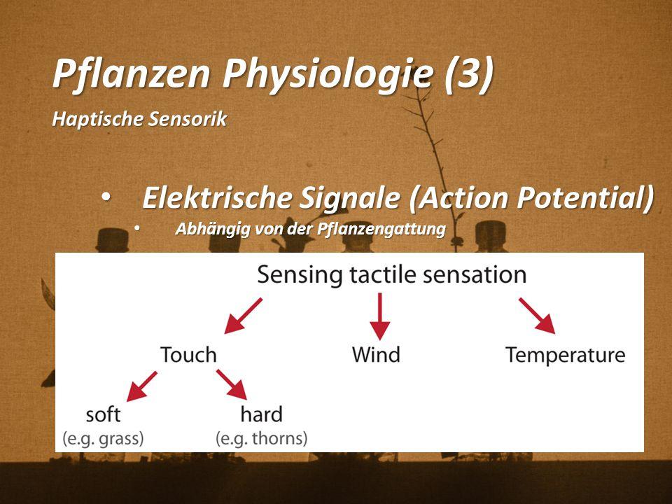 Pflanzen Physiologie (3) Haptische Sensorik Elektrische Signale (Action Potential) Elektrische Signale (Action Potential) Abhängig von der Pflanzengat