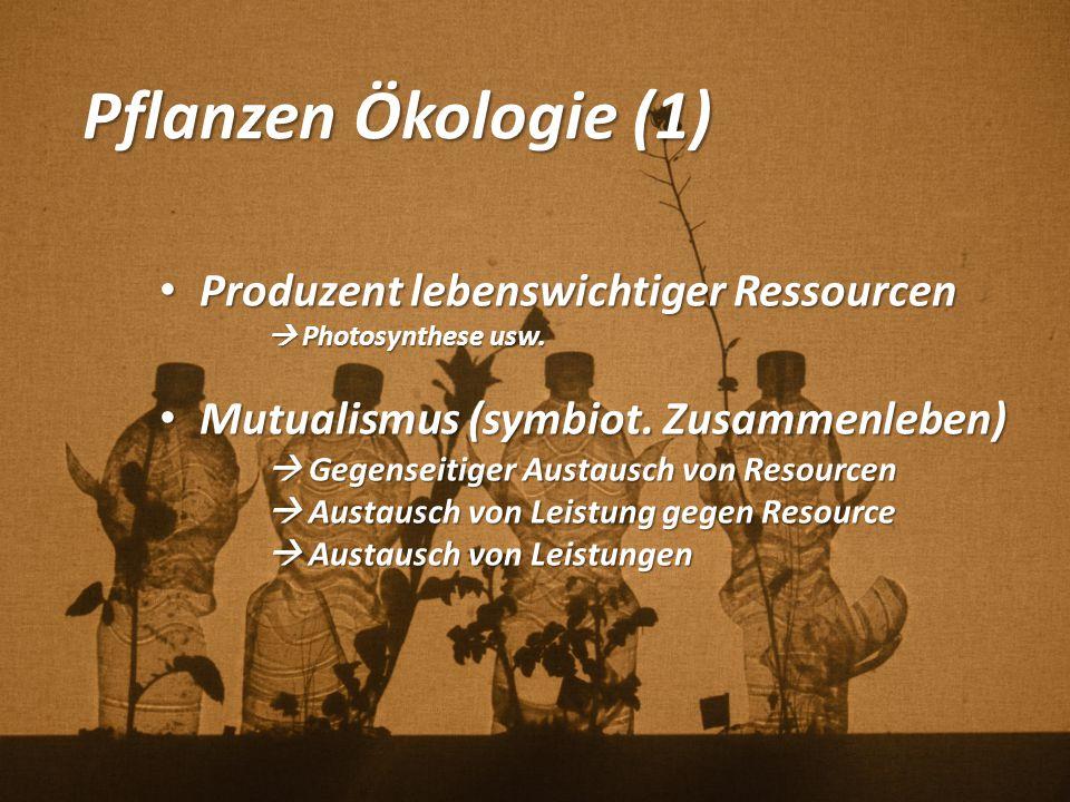 Pflanzen Ökologie (1) Produzent lebenswichtiger Ressourcen Produzent lebenswichtiger Ressourcen  Photosynthese usw. Mutualismus (symbiot. Zusammenleb