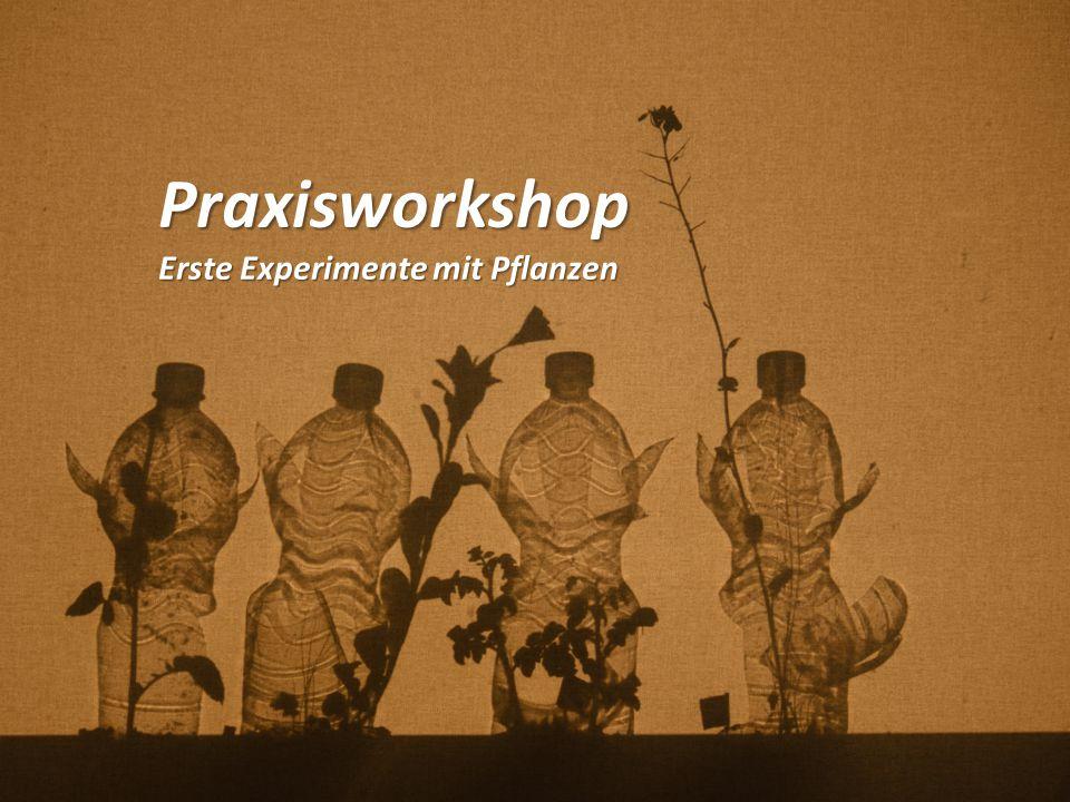 Praxisworkshop Erste Experimente mit Pflanzen