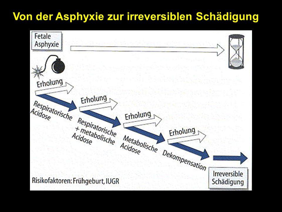 Von der Asphyxie zur irreversiblen Schädigung
