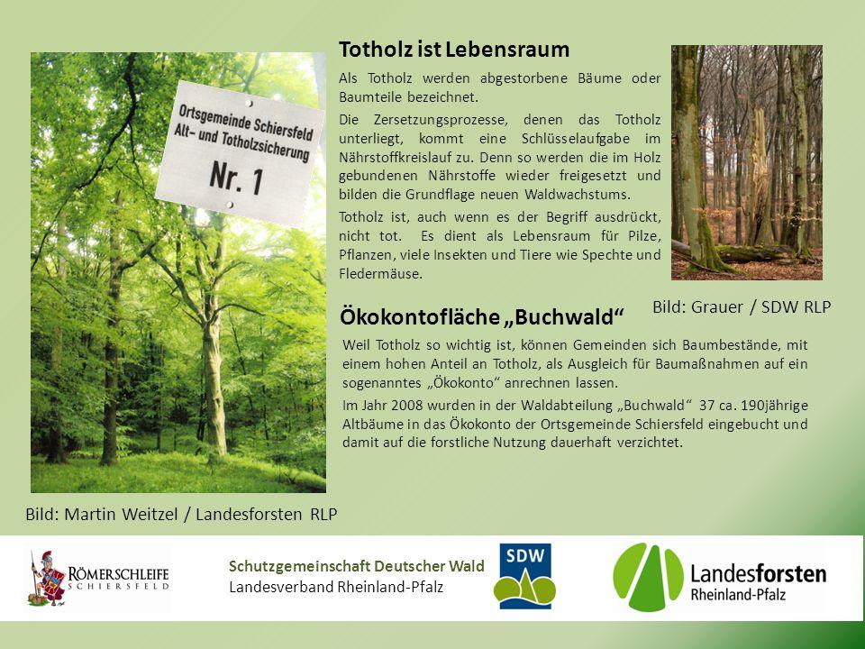 """Schutzgemeinschaft Deutscher Wald Landesverband Rheinland-Pfalz Ökokontofläche """"Buchwald Weil Totholz so wichtig ist, können Gemeinden sich Baumbestände, mit einem hohen Anteil an Totholz, als Ausgleich für Baumaßnahmen auf ein sogenanntes """"Ökokonto anrechnen lassen."""
