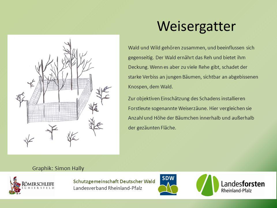 Schutzgemeinschaft Deutscher Wald Landesverband Rheinland-Pfalz Weisergatter Wald und Wild gehören zusammen, und beeinflussen sich gegenseitig.