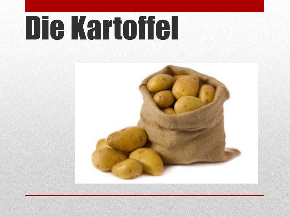 Die Kartoffel