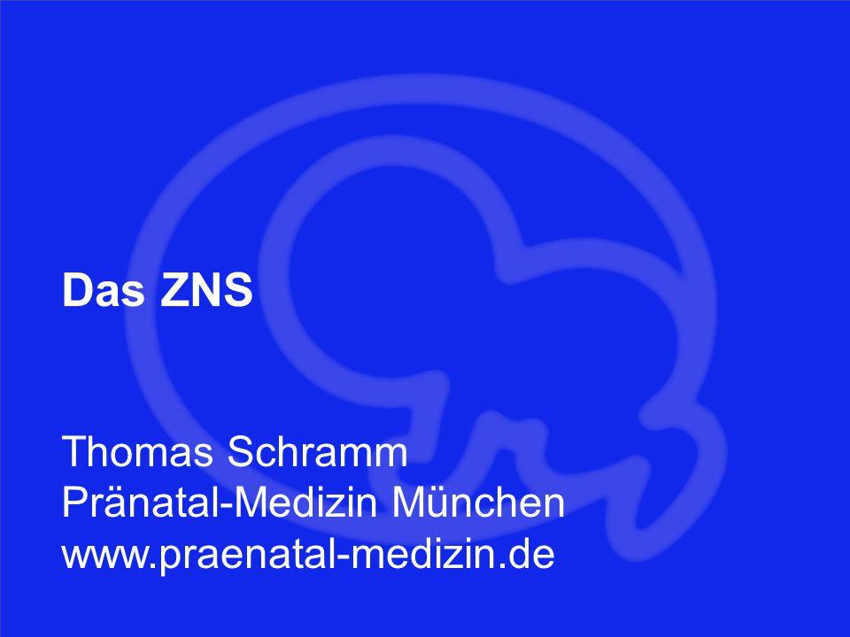 Gehirn Das ZNS Thomas Schramm Pränatal-Medizin München www.praenatal-medizin.de
