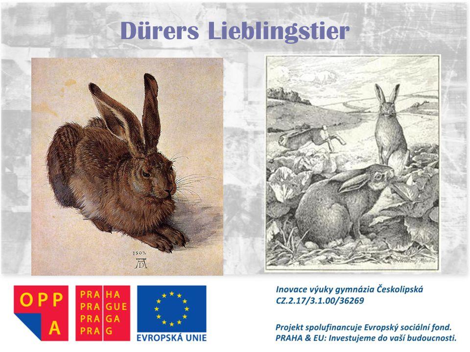 Dürers Lieblingstier