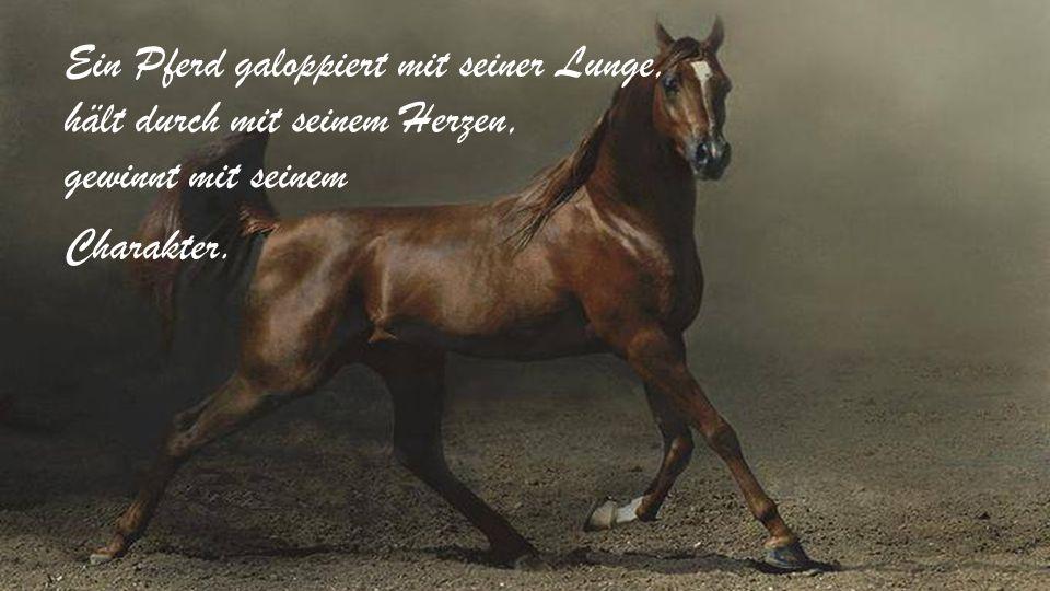 Sperrst du dein Pferd ein wird es versuchen wegzulaufen. Lässt du es aber frei, bleibt es bei dir.